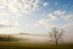Cades Cove Smoky Mountains Tennessee Lone Tree Photo Print Poster Smokies Sunrise Morning Sunset Mountain Landscape Fog Valley Zen Art Cloud