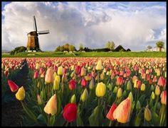 La disabilità è negli occhi di chi guarda.: Benvenuti in Olanda