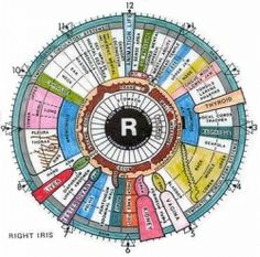 Iridology Eye Charts are brilliant and necessary tools to use when reading the…