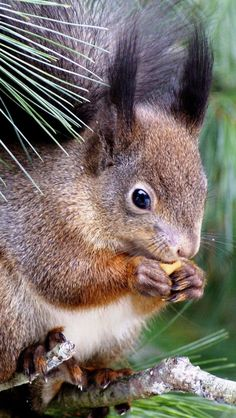 Squirrel, as crappy as it may sound feed these cute furry guys they are a first choice for alternate foo supply via pellet gun , (QUIET) or 22 3 of for u got a good meal.