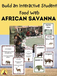 Food Chain Activities, Hands On Activities, Middle School Science, Elementary Science, Science Resources, Science Activities, Web Activity, Science Classroom Decorations, Food Chains