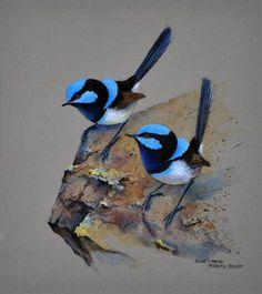 Blue bird tattoo ideas wings 42 new ideas Pretty Birds, Beautiful Birds, Animals Beautiful, Parus Major, Bird Artwork, Australian Birds, Bird Silhouette, Wild Creatures, Watercolor Bird