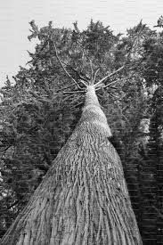 Image result for ansel adams most famous photographs