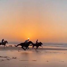 Cute Horses, Horse Love, Country Best Friends, Inspirational Horse Quotes, Beautiful Arabian Horses, Go Ride, Beautiful Nature Scenes, Majestic Animals, Horse Girl
