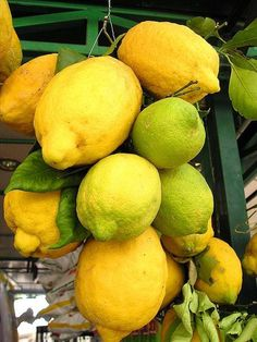 Limone IGP Costa d'Amalfi Costiera Amalfitana Campania