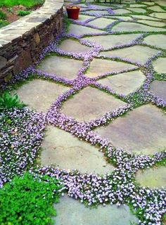 95 Beautiful Front Yard Cottage Garden Landscaping Ideas - New ideas Amazing Gardens, Beautiful Gardens, Stepping Stone Pathway, Stone Paths, Stone Garden Paths, Paver Stones, Flagstone Pavers, Concrete Walkway, Unique Garden