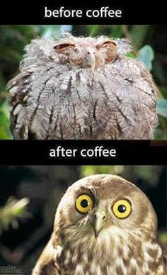 Use funny memes to check students' Spanish vocabulary. Use funny memes to check students' Spanish vocabulary. Funny Owls, Funny Animal Jokes, Funny Bunnies, Funny Animal Pictures, Animal Memes, Funny Cute, Funny Animals, Cute Animals, Funny Photos