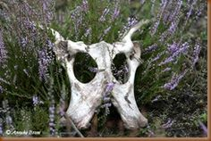bloeiende heide met skelet