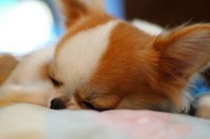 Gdy w domu gdzie mieszka pies pojawia się dziecko:  http://www.rodzinny-krakow.pl/zielono-mi/Gdy-w-domu-gdzie-mieszka-pies-pojawia-sie-dziecko.aspx