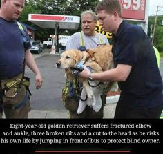Service dogs are known for showing complete devotion to the people they help, but one golden retriever is being lauded for going above and beyond — jumping in front of a school bus to save the life of his blind companion. Cute Funny Animals, Cute Baby Animals, Animals And Pets, Brave Animals, I Love Dogs, Puppy Love, Cute Puppies, Cute Dogs, Animal Heros