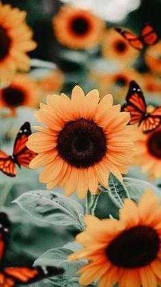 Sunflower Iphone Wallpaper, Flower Phone Wallpaper, Iphone Background Wallpaper, Screen Wallpaper, Phone Backround, Profile Wallpaper, Animal Wallpaper, Galaxy Wallpaper, Disney Wallpaper