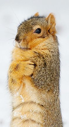 "Squirrel: ""Brrr... It's SO very cold! Thank goodness I have my own fur coat to keep me warm!"""