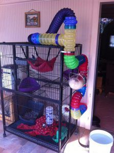 Looking for a new ferret cage? Read our guide on the best ferret cage if you don't want to lose your money on a poorly made cage. Ferret Toys, Pet Ferret, Rat Toys, Pet Rats, Chinchillas, Ferrets Care, Funny Ferrets, Cage Rat, Pet Rat Cages