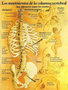 #enfermeria #expos #mapamental #mapaconceptual #laminas #columnavertebral