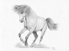 WHITE STALLION Horse Limited Edition art by ArcadiaPortraits
