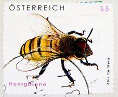 Honigbiene (Honey bee) apis mellifera .55¢ stamp, Austria