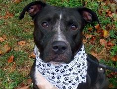 KILLED 8/2/12  URGENT WILL DIE TUESDAY https://www.facebook.com/photo.php?fbid=474430592569825=a.275017085844511.78596.152876678058553=3