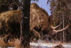 Wooly Rhinoceros (Pleistocene epoch)