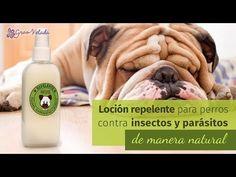 Repelente natural de pulgas y garrapatas para perros - YouTube
