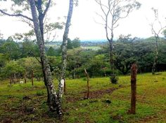 The backyard of #tinamoucottages in #boquete #chiriqui #panama
