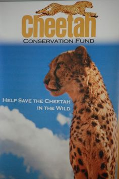 December 4, 2016 is National Cheetah Day, a day that honors the cheetah for its iconic status as the fastest mammal on Earth and calls attention to its ...