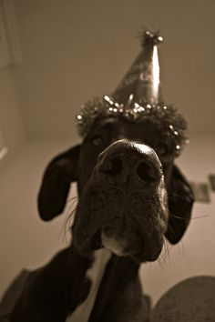 #Great #Dane Birthday party