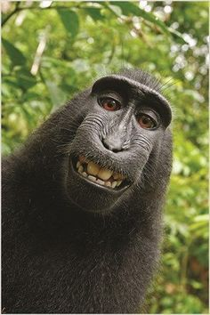 funny monkey face HUMOROUS PHOTO POSTER kid friendly ANIMAL LOVER 24X36 new