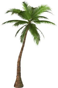free svg pdf png jpg eps palm tree silhouette cricut pinterest