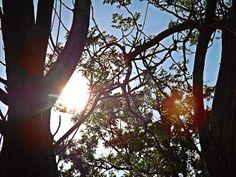 Olhares do avesso: Coração parado na luz (miniconto) – por Rafael Belo... Ela sentia-se o próprio sol. Incandescente, iluminada. miniConto. Entre. http://olharesdoavesso.blogspot.com.br/2014/05/coracao-parado-na-luz-miniconto-por.html She felt the sun it... Tale. Come in. http://olharesdoavesso.blogspot.com.br/2014/05/coracao-parado-na-luz-miniconto-por.html #miniconto #iluminados #coraçãoparado #luz #tale #illuminated #heartstopped #light #Kahānī #Prabud'dha #Prakāśa #Gùshì #Zhàomíng #Guāng