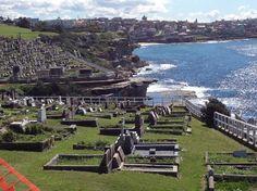 Bondi to Coogee Beach Coastal Walk: Coogee --- Bondi Beach Walk  -  Waverly cemetery  #Sydney #Australia