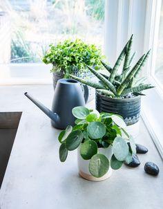 Hydroponics and Indoor Gardening All Plants, Indoor Plants, Living Vintage, Landscape Edging, Garden Living, Snake Plant, Scandinavian Living, Terracotta Pots, Diy Design