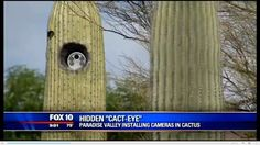 Arizona town mounts dozens of new license plate readers in fake cactuses