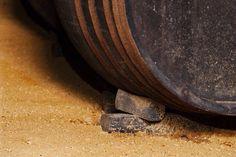 Albero. Bota Jerezana. Bodegas Urium. Vinos de Jerez. Sherry Wines