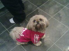 Bluza dla psa Adidog Cute, Dogs, Animals, Animais, Animales, Animaux, Kawaii, Pet Dogs, Doggies
