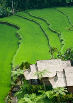 Beautiful Scenery of Green Rice Field in Bali, Indonesia Places Around The World, Oh The Places You'll Go, Places To Travel, Places To Visit, Around The Worlds, Travel Destinations, Bali Lombok, Beautiful World, Beautiful Places