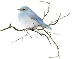 Little blue bird, would be neat to frame pastels or watercolor  for baby room and bathroom.