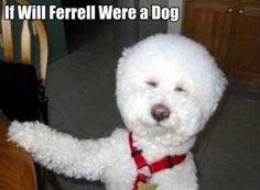 #Lol #WillFerrell #Dog