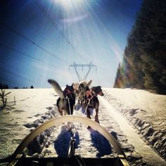 Perfect day with my musher bf :)