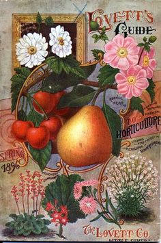 1896 Lovett's Vintage Flowers Fruit Seed Packet Catalogue Advertisement Poster