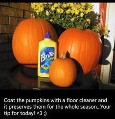 Tips for the pumpkins