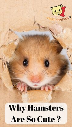 26 Best hamster images in 2016 | Gerbil, Hamster house