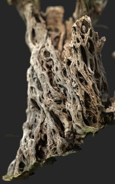 3d Portrait, 3d Tree, A Thousand Years, Drift Wood, Olive Tree, Wood Texture, Science And Nature, All Art, Wood Grain