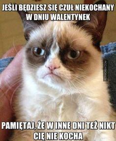 Grumpy Cat Quotes, Funny Grumpy Cat Memes, Funny Animal Memes, Funny Cat Videos, Funny Animals, Funny Memes, Funny Quotes, Animal Jokes, Grumpy Cats