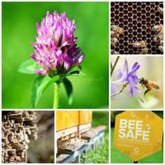 Bee Friendly and Support Your Local Mason Bee Population - Savvy Saving Couple