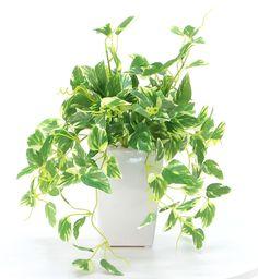 光触媒人工観葉植物 8315「ミニゴールデンポトス 28cm(白陶器)」造花ドットコム zouka.com