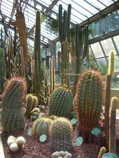 Madrid-Royal-Botanical-Garden-Cacti.jpg (1050×1400)