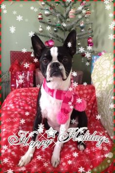 Pearl's Christmas Pic- 2012
