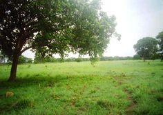 Fazenda de gado em Dueré -  Tocantins - Brasil