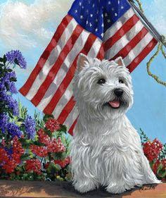 Patriot Dog wishes you a Happy 4th!