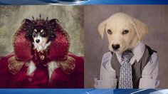 shelter dogs get glamour shots taken to help get adopted, raise funds Animal Protection, Shelter Dogs, Doge, Arkansas, Glamour, Pets, Animals, El Dorado, Animales